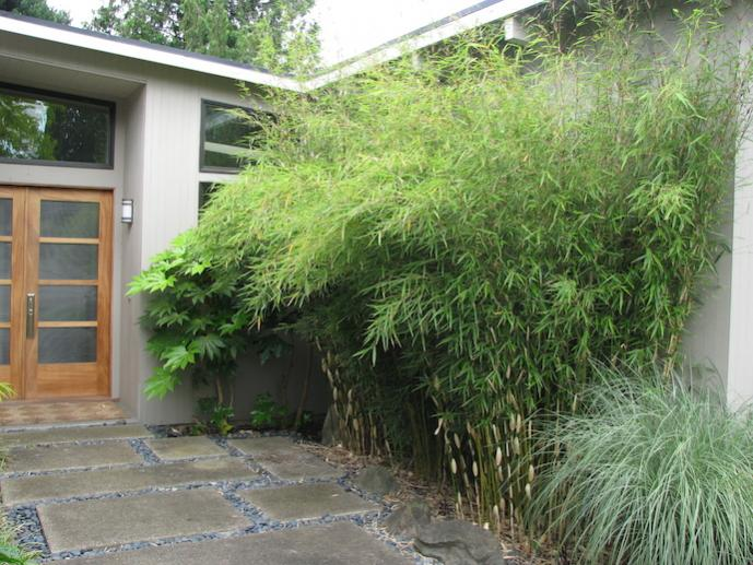 Ornamental grasses and bamboo for Grasses planting scheme